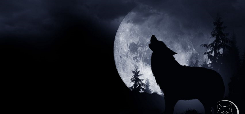 Howling under the Wolf Moon